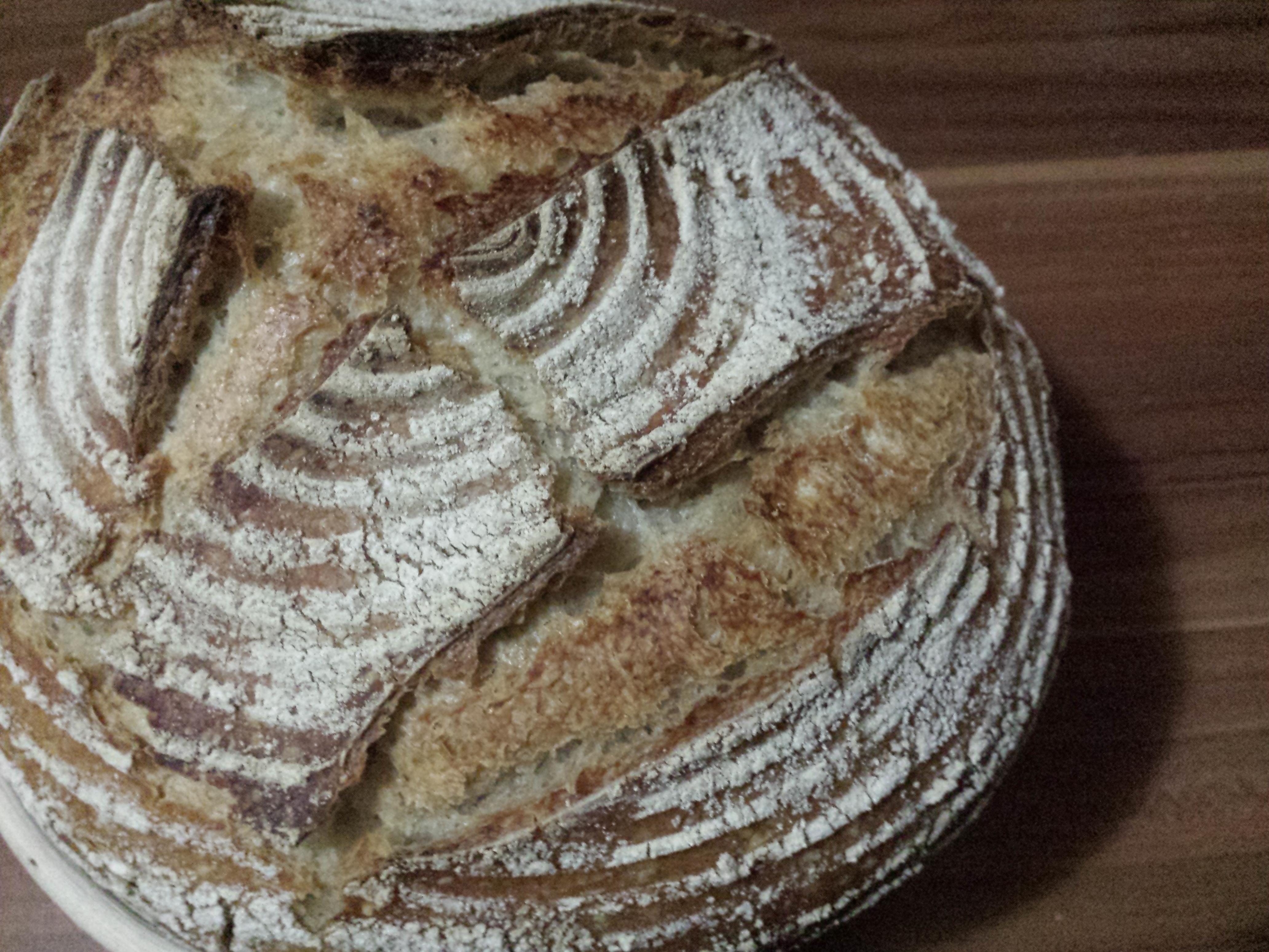 kruh-od-divljeg-kvasca